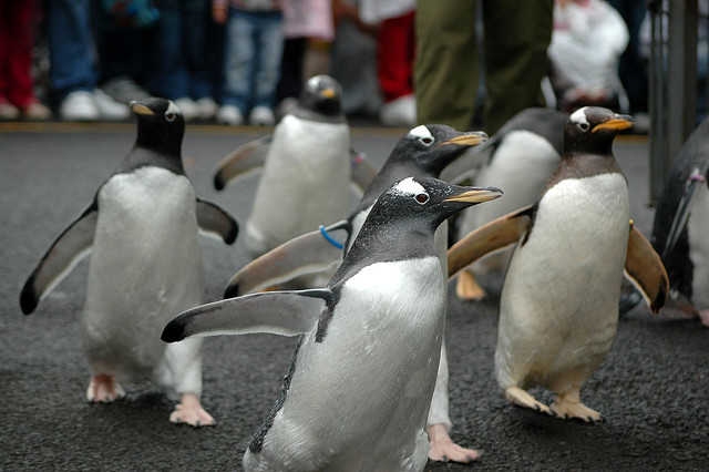 Penguin Attack