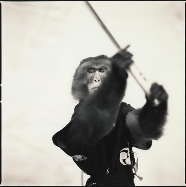 samurai-monkey-hiroshi-watanabe-1