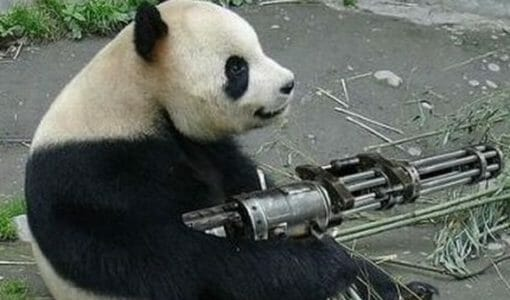 Future Google Panda Rollouts: How to Keep Your Site Safe