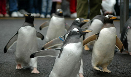 How to Survive the Penguin Attack